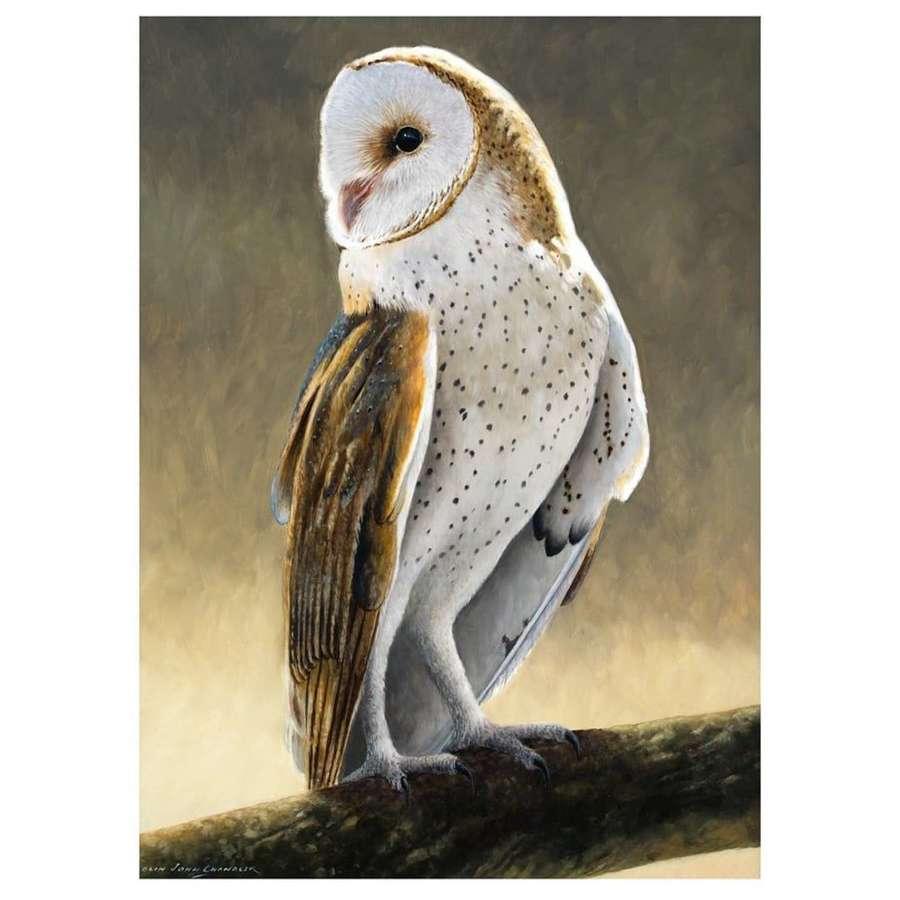 Colin John Chandler - Barn Owl