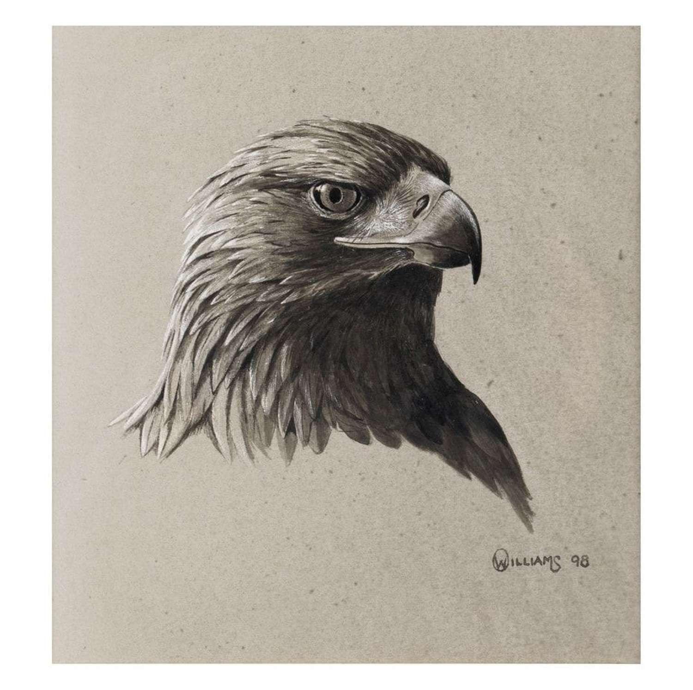 Owen Williams - Eagle study