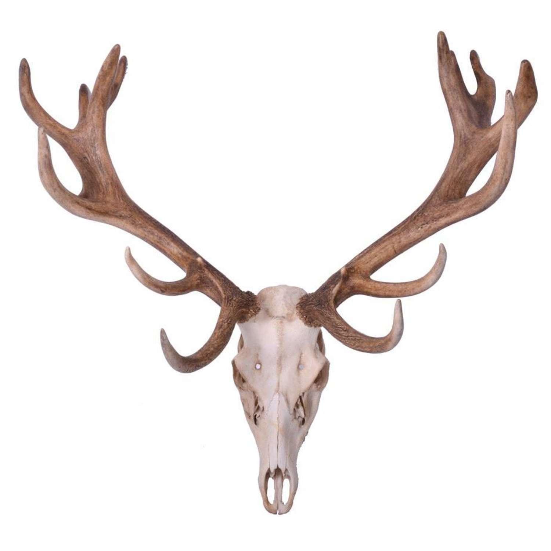 Imperial red deer antlers