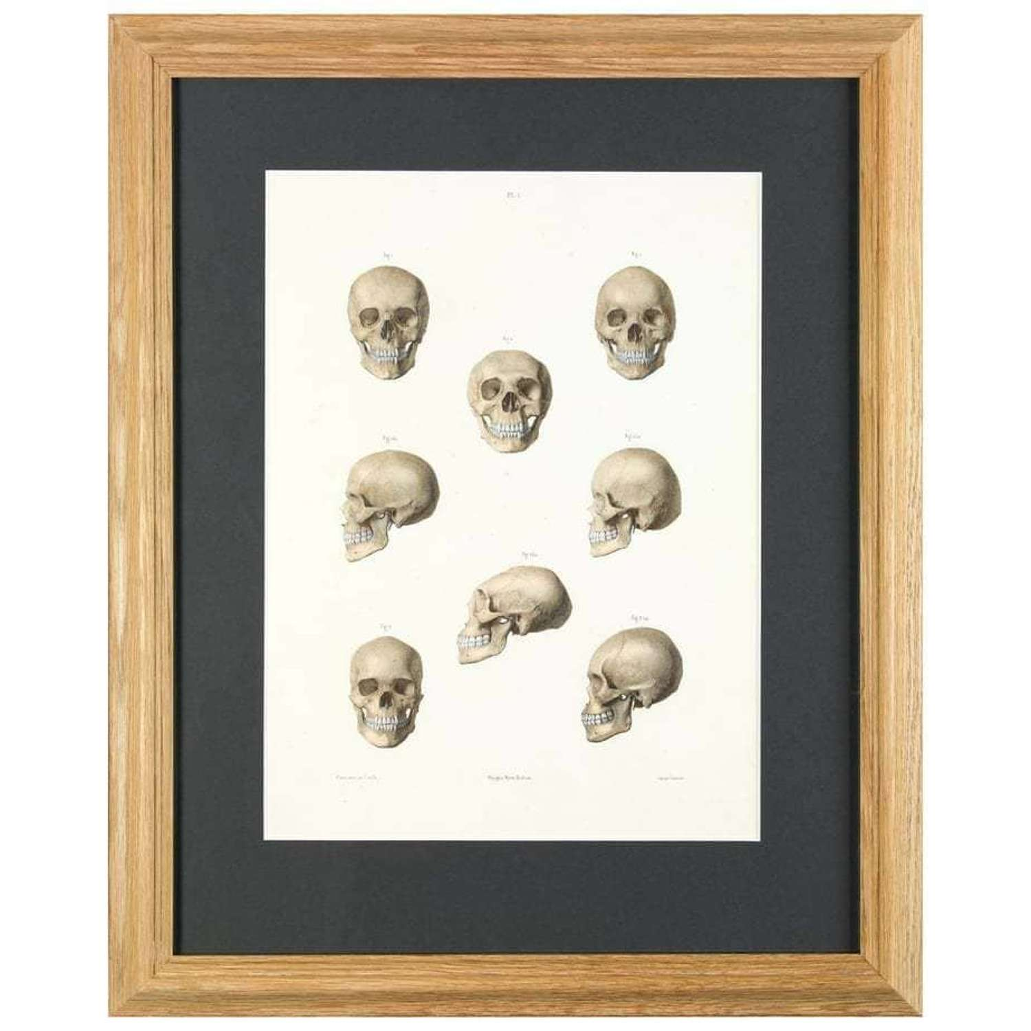 Lithograph - M Leveille - The human skull